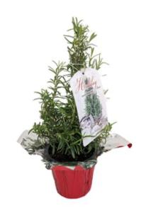 Rosemary or Lavender Christmas Tree